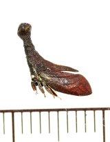 ツノゼミの一種 Lycoderides amazonicus ペルー