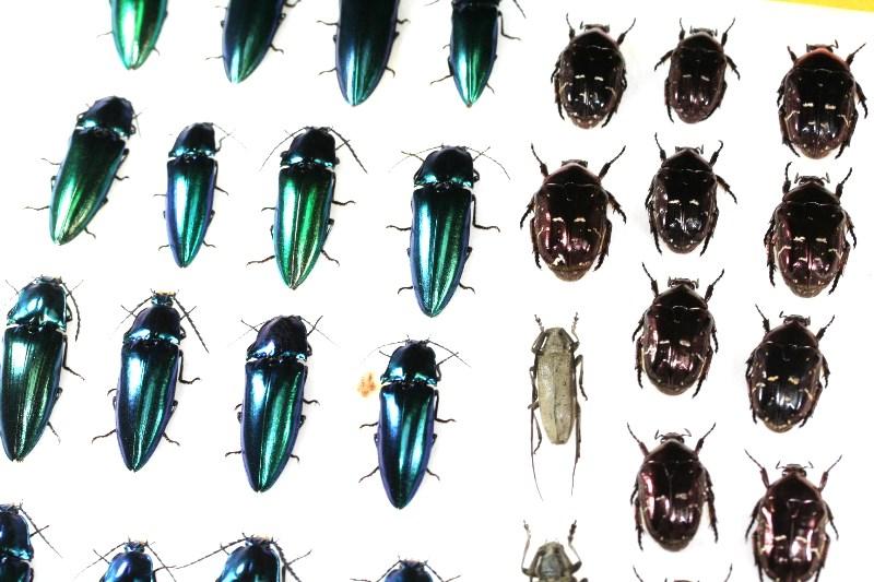 与那国島に昆虫採集に行ってきました!